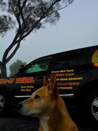 4WD Tours Australia