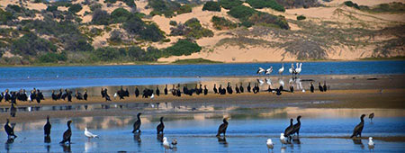 Coorong National Park Tours