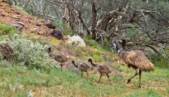 Flinders Ranges Bushwalking