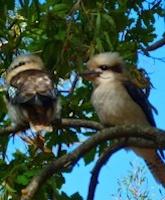 Grampians Birdlife