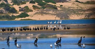Coorong National Park Tour
