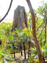 Termite Mounds Top End Tour